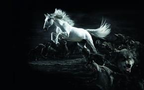 Обои белый, Конь, волки, полумрак, wolf, horse