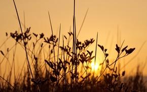 Картинка трава, восход, стебли, кусты