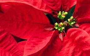 Обои листья, красные, Цветочки