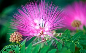 Картинка цветок, листья, природа, экзотика