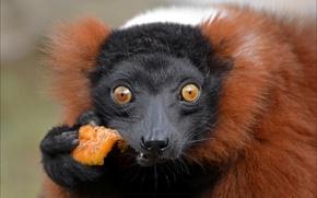 Картинка еда, удивление, обезьяна