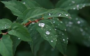 Картинка вода, капли, макро, природа, дождь, растение, утро