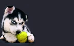 Картинка рисунок, щенок, мячик, хаски