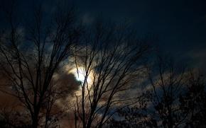 Обои луна, деревья, ночь