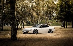 Обои деревья, белая, Silvia, Nissan, white, ниссан, сильвия, S13