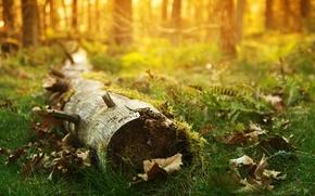 Картинка трава, свет, дерево, листва, фокус, ствол, by Robin de Blanche, привал, Resting