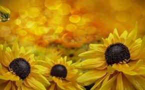 Картинка цветы, капельки, flowers, dew, росинки, droplets