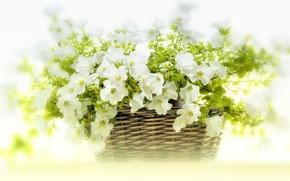 Картинка цветы, корзина, белые, петунья