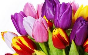 Картинка листья, цветы, яркие, красота, букет, лепестки, фиолетовые, тюльпаны, красные, red, розовые, white, белые, разноцветные, yellow, ...