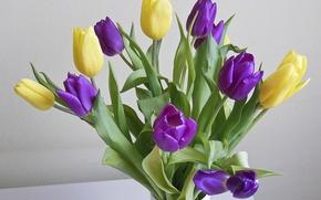 Обои ваза, букет, тюльпаны, желтые
