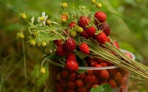 Обои ягоды, стакан, земляника