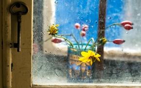 Обои цветы, ключ, стекло, окно