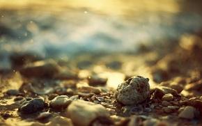 Картинка камни, ракушки, bokeh