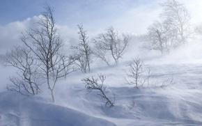 Обои вьюга, холод, снег, зима, холм, деревья, лес