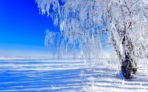 Картинка поле, небо, снег, дерево, Зима