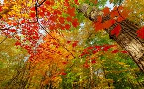 Картинка осень, лес, ветки, природа, краски, листва