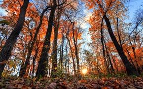 Картинка осень, лес, небо, листья, солнце, лучи, деревья