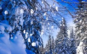 Картинка зима, лес, снег, деревья, ветки, Россия, Хабаровский край