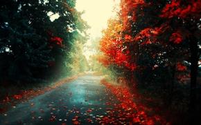 Обои дорога, осень, листья, свет