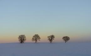 Картинка зима, небо, снег, деревья, вечер, линия, горизонт
