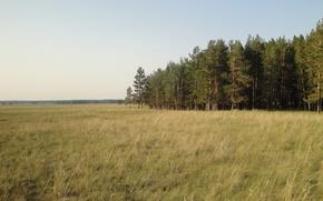 Картинка лес, желтая трава, желтый, тепло, горизонт, сосны, просторы, Степь
