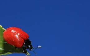 Картинка небо, лист, жук, насекомое
