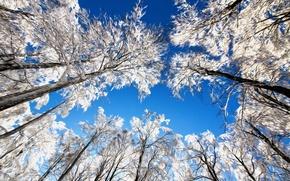 Картинка небо, снег, деревья, линии, ветки, природа, штрих