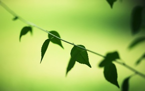 Картинка зелень, листья, макро, деревья, зеленый, фон, дерево, обои, растительность, wallpaper, листочки, широкоформатные, листики, background, leaves, …