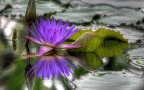 Обои вода, распустился, hdr, Цветок