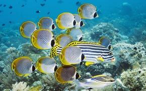 рыбы, океан, кораллы обои
