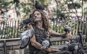 Картинка птицы, улица, человек