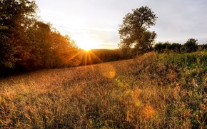 Картинка лес, трава, деревья, закат, природа, фото, рассвет, лучи света