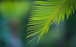 Картинка зелень, листья, ветка