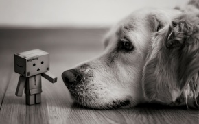 Картинка взгляд, коробка, собака, лежит, черно-белое, Danbo, amazon, коробок