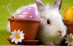 Картинка яйцо, ромашка, кролик, пасха, горшок, easter
