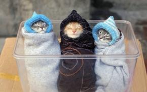 Обои животные, коробка, коты