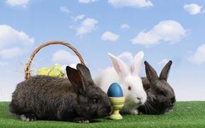 Картинка корзина, яйца, Пасха, кролики, пасхальные