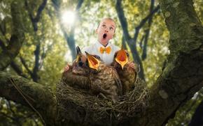 Картинка гнездо, ребёнок, птенцы, The bird choir
