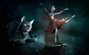 Картинка кошка, взгляд, балерина