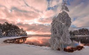 Картинка snow, снег, lake, tree, дерево, озеро, зимний пейзаж, winter landscape