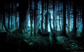 Обои Лес, Жудкий лес, Тёмный Лес