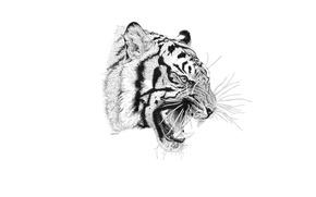 Картинка тигр, хищник, пасть, клыки
