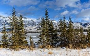 Картинка снег, горы, озеро, ели, Канада, Альберта, национальный парк, Джаспер