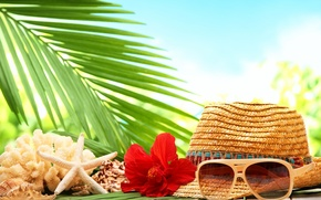 Картинка море, пляж, цветок, пальма, шляпа, ракушка