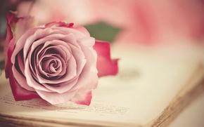 Картинка роза, бутон, книга, винтаж