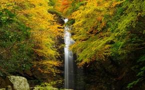 Картинка осень, лес, листья, деревья, скала, камни, водопад, желтые
