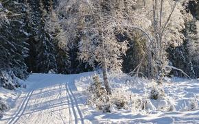 Обои зима, снег, дорога, деревья, иней