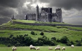 Обои тучи, замок, овцы, холм, Ирландия, Ireland