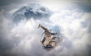 Картинка жираф, photomanipulation, sky sailor, finearts