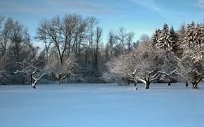 Картинка зима, поле, деревья